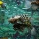 Ryba rybie nierówna?