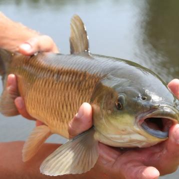 Łowienie dla satysfakcji